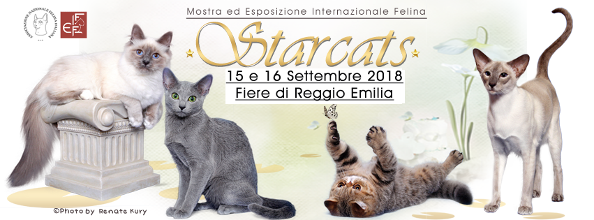 Expo Felina Star Cats Show